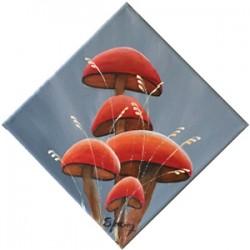 Champignons rouges 1